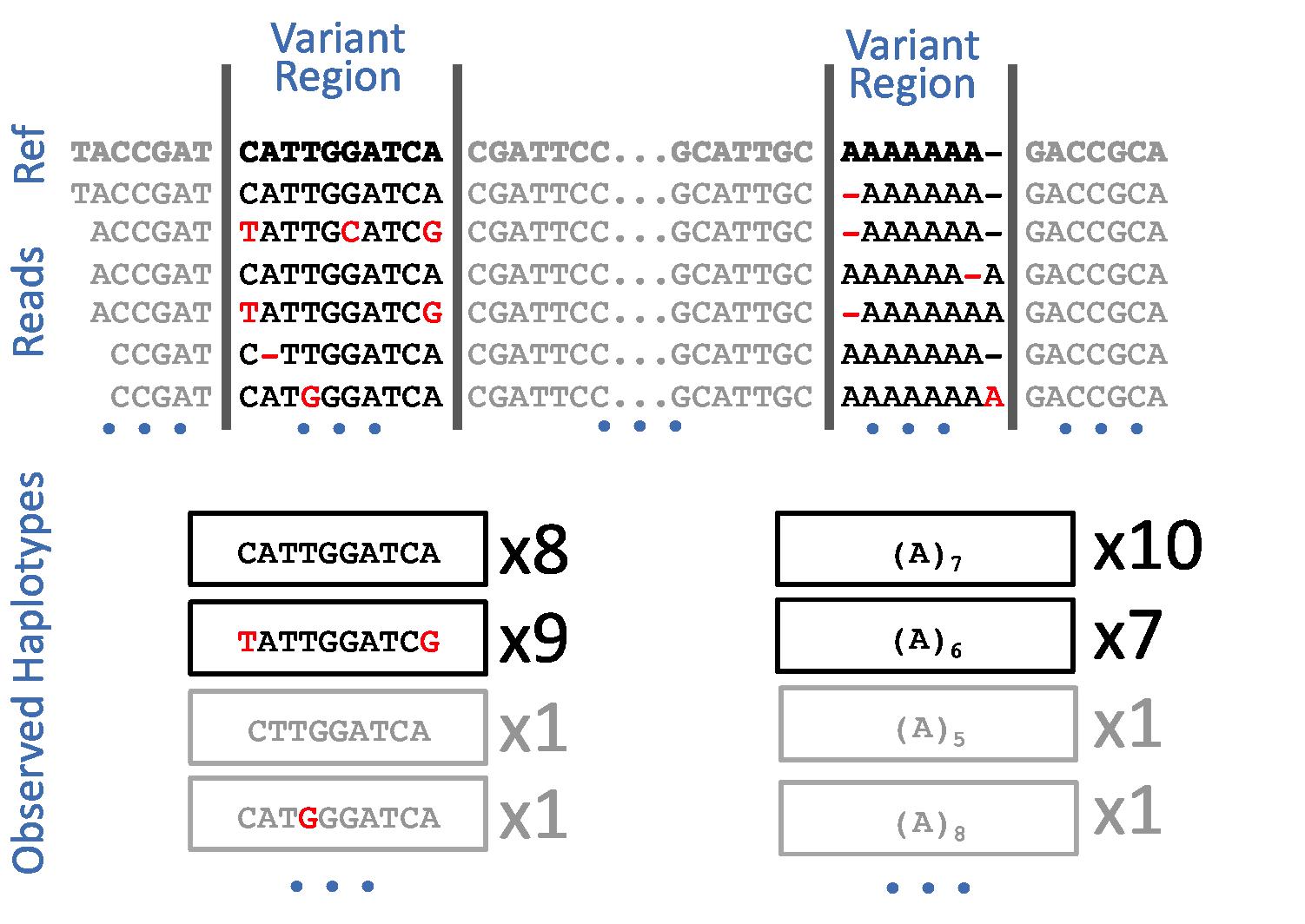 direct haplotype detection